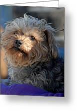 Dog 49 Greeting Card by Joyce StJames