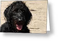 Dog 73 Greeting Card