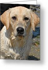 Dog 77 Greeting Card by Joyce StJames