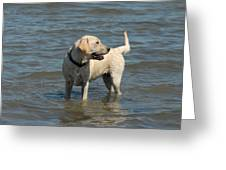 Dog 78 Greeting Card