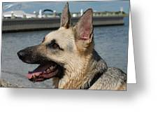 Dog 94 Greeting Card by Joyce StJames