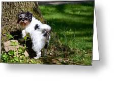 Dog And Tree Greeting Card