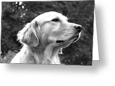 Dog Black And White Portrait Greeting Card