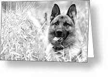 Dog In Field Greeting Card