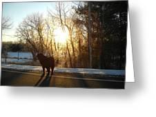 Dog In Morning Sun Greeting Card