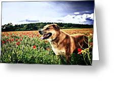 Dog In The Poppy Field Greeting Card
