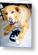Dog Named Forest And Kitten Named Princess Greeting Card