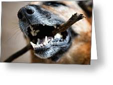 Dog Nose And Teeth Greeting Card