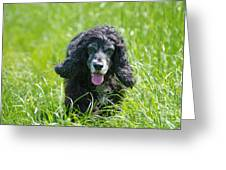 Dog On The Grass Greeting Card