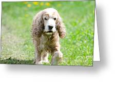 Dog On The Green Field Greeting Card by Mats Silvan