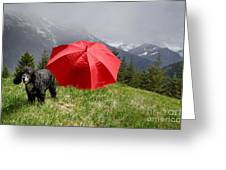 Dog On The Top Of A Mountain Greeting Card