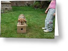 Dog Playing Greeting Card