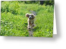 Dog Running In The Green Field Greeting Card