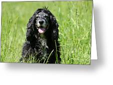 Dog Sitting On The Green Grass Greeting Card
