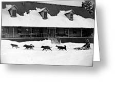 Dog Sled Greeting Card