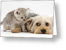 Dog Surrendering To Kitten Greeting Card