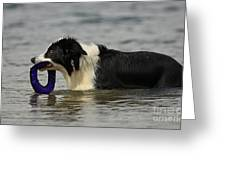 Dog To The Rescue Greeting Card