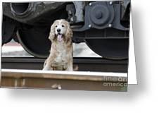 Dog Under A Train Wagon Greeting Card