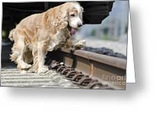 Dog Walking Over Railroad Tracks Greeting Card