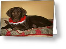 Dog With Christmas Collar Greeting Card