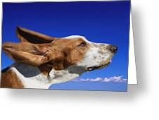 Dog With Ears In The Wind Greeting Card