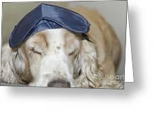Dog With Sleep Mask Greeting Card