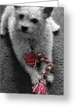 Dog With Tug Toy Soft Focus Greeting Card
