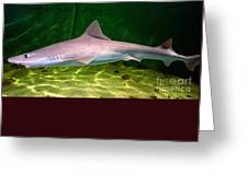 Dogfish Shark In Aquarium Greeting Card