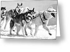 Dogs Leashed To A Chariot Greeting Card