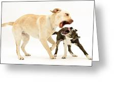 Dogs Playing Greeting Card by Mark Taylor