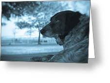 Dog's Point Of View Greeting Card