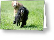 Dogs Running On The Green Field Greeting Card