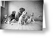 Dogs Watching At A Spot Greeting Card by Sumit Mehndiratta