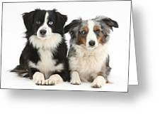 Dogs With Different-colored Eyes Greeting Card