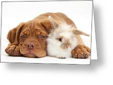 Dogue De Bordeaux Puppy With Bunny Greeting Card