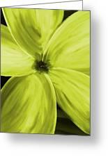 Dogwood Bloom Yellow Greeting Card
