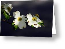 Dogwood Blossom - Beelightful Greeting Card