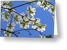 Dogwood Blossoms 2 Greeting Card