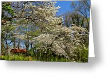 Dogwood Grove Greeting Card by Debra and Dave Vanderlaan