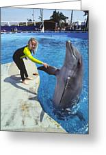 Dolphin And Child Greeting Card