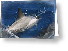 Dolphin Escort Greeting Card