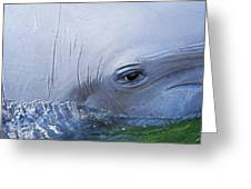 Dolphin Eye Two Greeting Card