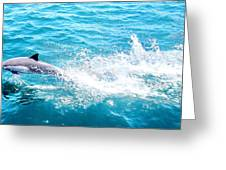 Dolphin In Baja Greeting Card