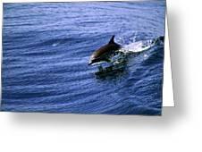 Surfrider Greeting Card
