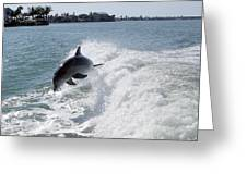 Dolphin Playing Greeting Card