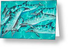 Dolphin Pod Greeting Card