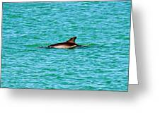 Dolphin Swimming Greeting Card