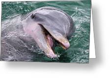 Dolphin With His Fish Greeting Card