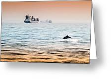Dolphing Playing In The Sunset Greeting Card