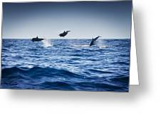 Dolphins Playing In The Ocean Greeting Card